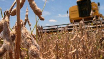 Ahora son 59 millones las toneladas de soja