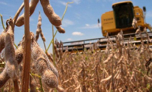 El avance de la cosecha de soja alcanza el 30%, desprendiéndose un rinde medio nacional de 30,5 qq/ha.