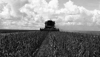 Cosecha de soja: 3000 millones de dólares menos que en 2014