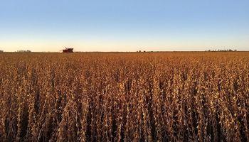 La soja en Chicago alcanza niveles mínimos en el mes