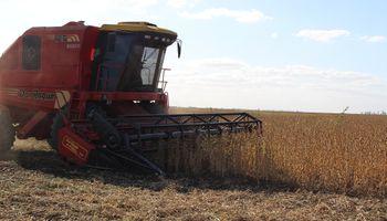 Elevan las proyecciones de soja por elevados rendimientos