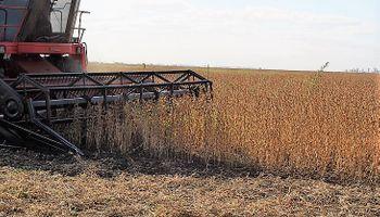 La cosecha hizo pie en Agroactiva