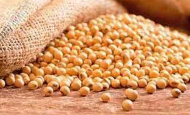 Pérdida de valor para la cosecha de soja local