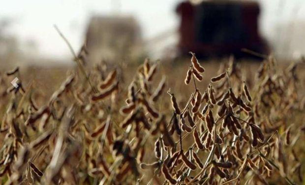 En los últimos 9 días, el contrato de soja en el Mercado a Término de Buenos Aires (Matba) perdió 6,7% y cerró u$s 235,80 toneladas.