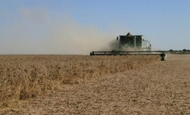 Lote de soja de primera, muy buen desarrollo, en pleno proceso de cosecha en el centro oeste del departamento San Martín.-