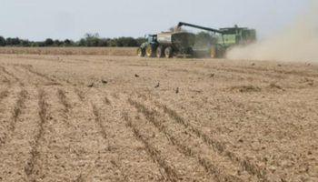 Avanza la cosecha, se consolidan los rindes en Santa Fe