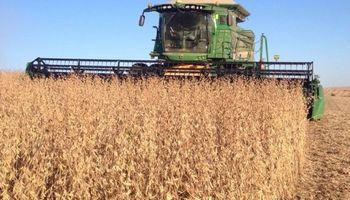 Se reanudaron a todo ritmo las labores de cosecha en Santa Fe