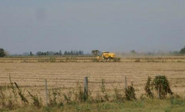 Lote de soja de primera, muy buen desarrollo, en pleno proceso de cosecha en el centro oeste del departamento La Capital.-