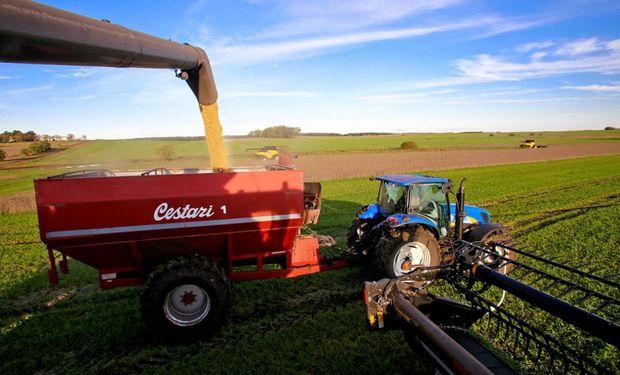 Cosecha de soja culminó con caída de 30% en la producción.