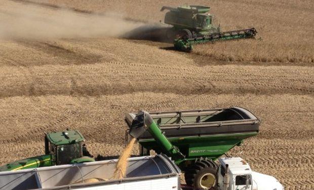 SOJA. La cosecha habría avanzado sobre un 4% de la superficie.