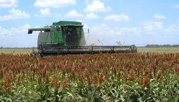 La cosecha de sorgo sería de 4,3 M Tn.