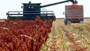 Finalizó la cosecha de sorgo granífero con una merma del 18,6% en volumen