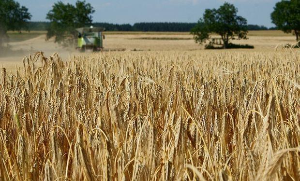 Se cosechará un millón menos de toneladas de trigo