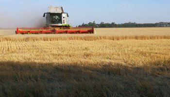 Video: picos de 100 quintales para el trigo en Córdoba