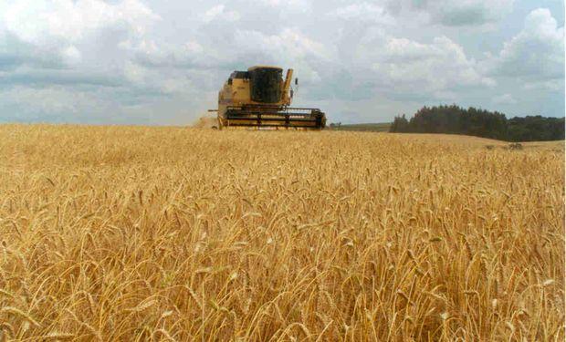 Existencias iniciales de trigo se redujeron de 4,20 a 4 millones de toneladas.