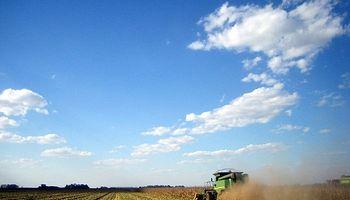 Prevén gran cosecha de trigo en China