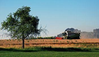 La producción mundial de cereales 2013/14 aumentaría 10%