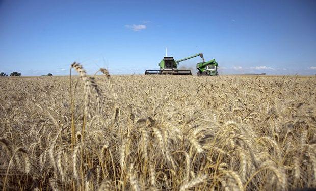 Luego de 6 meses sin lluvias, cae un 70% la producción de trigo en Tucumán