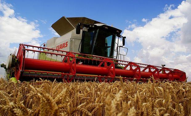 Ucrania produciría 24,4 millones de tn de trigo