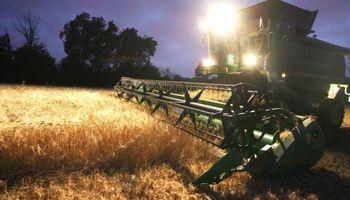 Cosecha de trigo en Uruguay, con resultados dispares