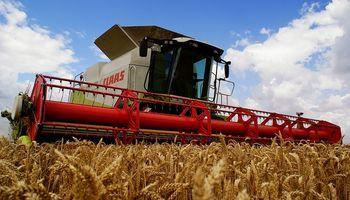 Trigo: cosecha en Europa sería récord