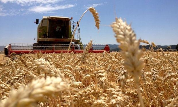 Los mayores avances de cosecha se registraron en el extremo norte del área agrícola.
