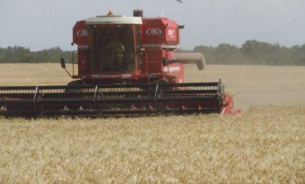 La cosecha de trigo comenzó en regiones del norte.