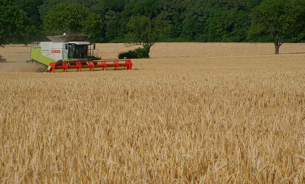 El trigo ya comenzó a cosecharse en el norte del país.