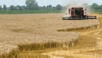 Avanza a pleno la cosecha de trigo en el centro norte de Santa Fe