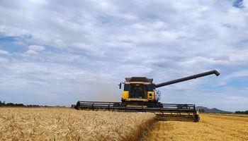 Pese a la sequía, volvió a aumentar el aporte del trigo a la economía