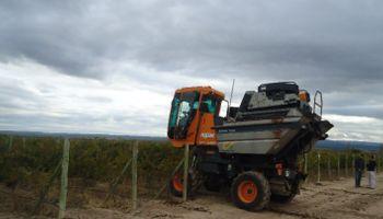 Una campaña con ingresos insuficientes para la producción vitícola