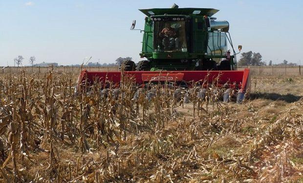 Comenzó la cosecha de los primeros lotes de maíz.