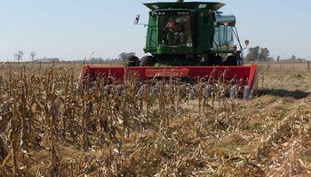 El maíz mostró buenos rendimientos en los primero lotes de Santa Fe