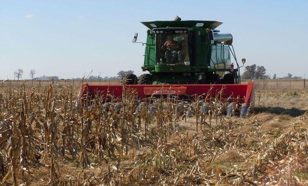 La cosecha de granos se estancó y aportará menos dólares
