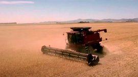 Ingreso récord de dólares: pese a la sequía, el aporte de soja, trigo y maíz a la economía crecería un 33% contra 2020