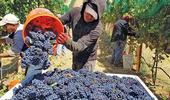 Pedido urgente de las economías regionales: que los beneficiarios de planes sociales puedan trabajar