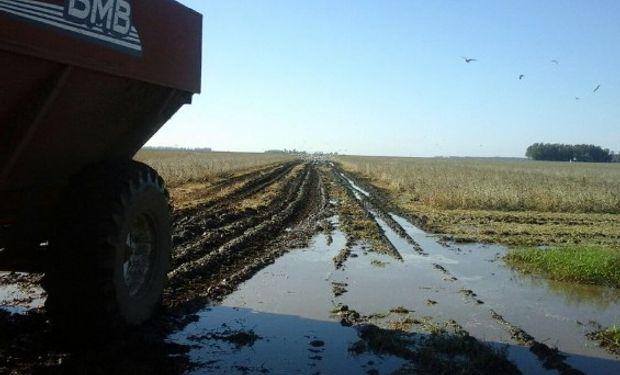 La próxima tanda de cosecha debe avanzar sobre cuadros alejados de rutas y caminos que se internan en pantanales; sin dudas, una gran limitante.