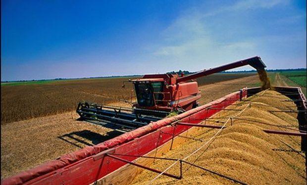 Se producirían un 23% menos de maíz y un 7% menos de soja.