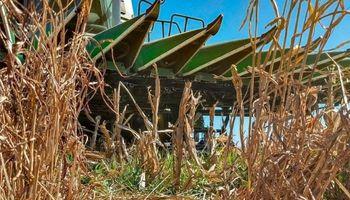La Pampa: se encontró con crías de puma en plena cosecha