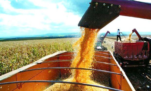 Recolección de los cultivos de verano entra en la etapa final