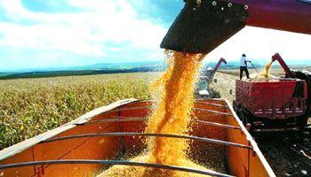 Gran parte de la cosecha de maíz ingresará tarde