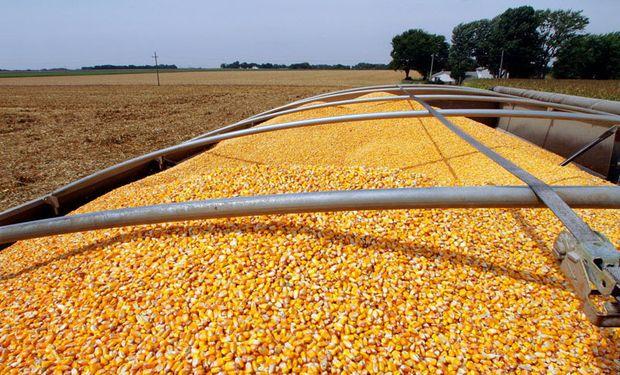 Informe del USDA: en plena cosecha argentina hay fuertes subas para el precio del maíz en Chicago
