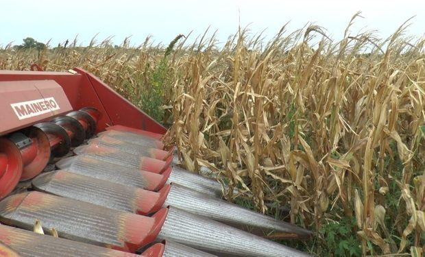 """Consejos para soja, trigo y maíz: cómo escapar del """"riesgo político"""" y los factores que impactan en el mercado"""