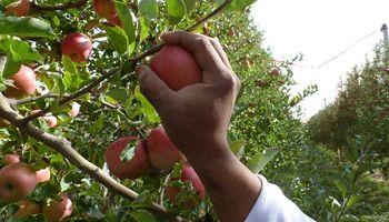 Rige la obligatoriedad de las Buenas Prácticas Agrícolas para el sector frutícola