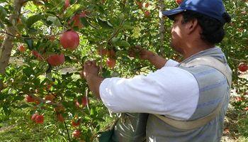 Solicitan extender la emergencia frutícola para peras y manzanas