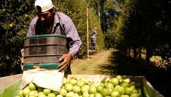 Producción de peras y manzanas fue la más baja de los últimos 10 años