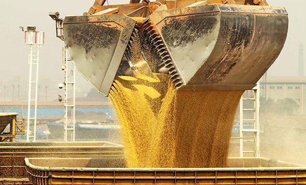 Las cosechas récord en Estados Unidos, Brasil y la Argentina influyeron en la tendencia bajista en el precio de la harina.