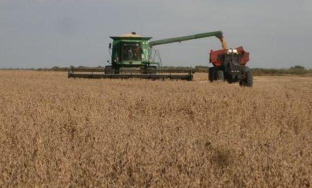 Lote de soja de primera, muy buen desarrollo, en pleno proceso de cosecha en el noroeste del departamento Las Colonias.-