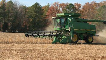 Soja en Estados Unidos: USDA recortó estimación de cosecha