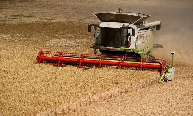 Caería la cosecha global de trigo y maíz en 2014/15